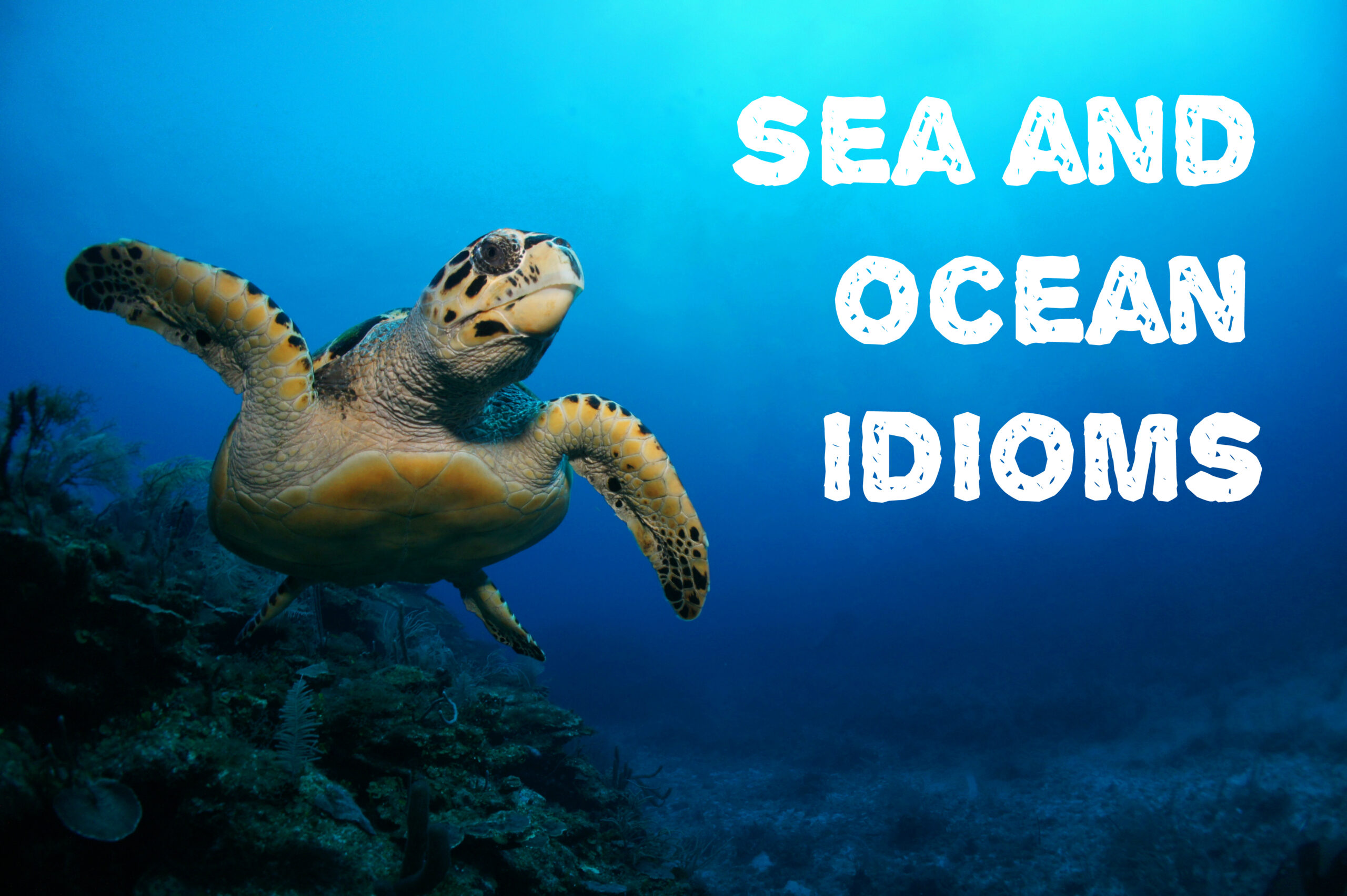 sea_and_ocean_idioms