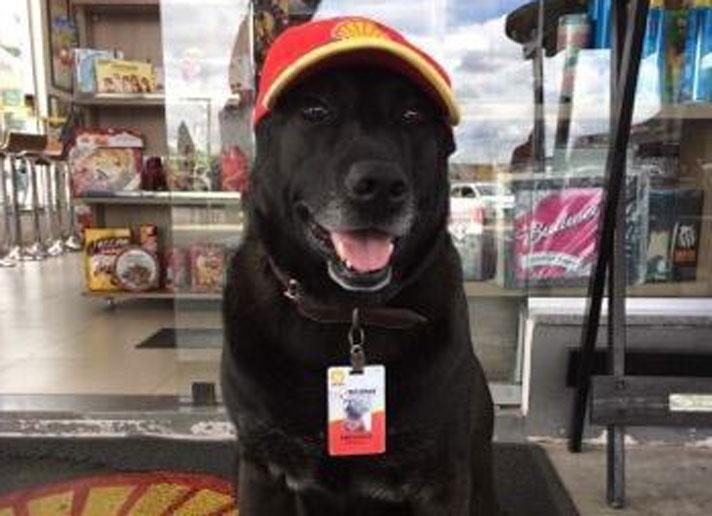 dog-gas-station-main