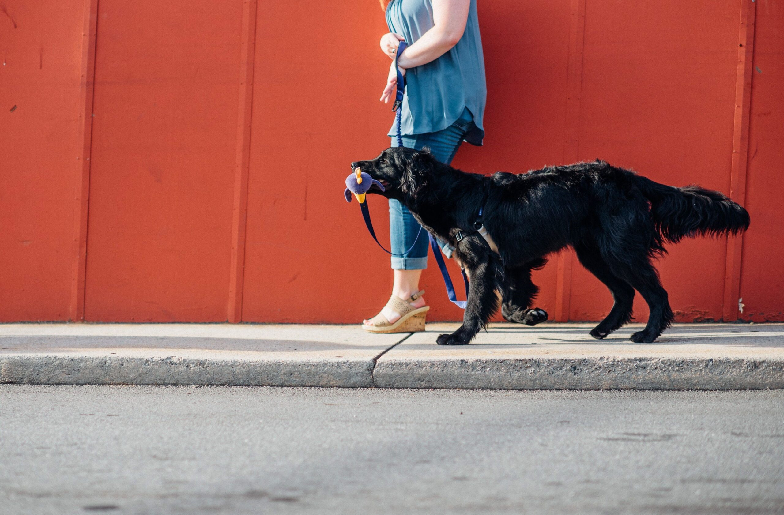 'We Leash' two way dog lead which has handle for owner and handle for dog, Georgia, USA – Oct 2016